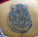 tigerback